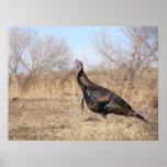 Lone Turkey Print
