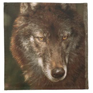Lone wolf American MoJo Napkin