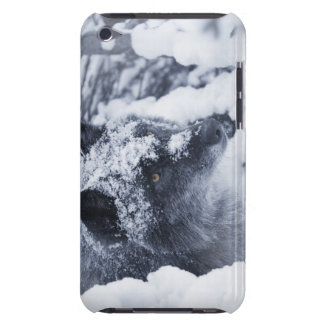 Lone wolf in snow barely there iPod cover