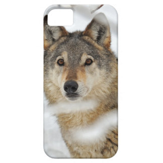 Lone Wolf in Snow iPhone 5 Case