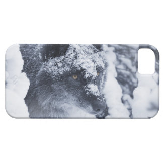 Lone wolf in snow iPhone SE/5/5s case