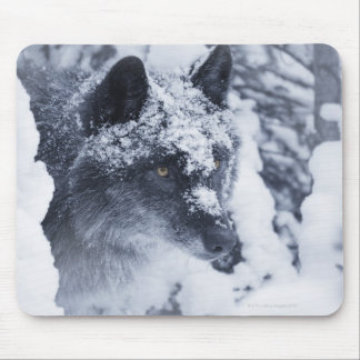 Lone wolf in snow mouse pad