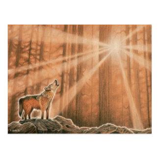 Lone Wolf Postcard