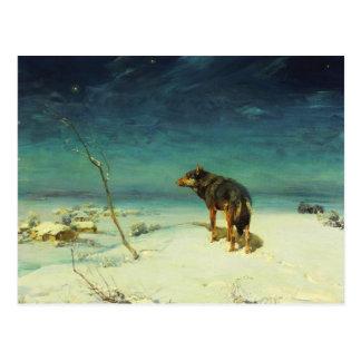 Lone Wolf Samotny Wilk Postcard
