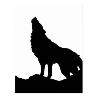 Lone Wolf Standing on a Hill Postcard