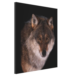 Lone wolf Stretched Canvas Print
