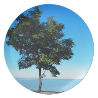Lonely acacia tree with green leaves on the coast dinner plate