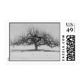 Lonely Apple Tree Stamp