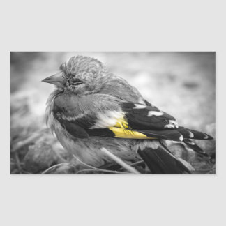 Lonely bird rectangular sticker