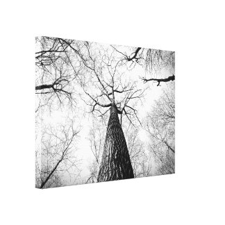 Lonely Branches Canvas Print