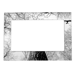 Lonely Branches Magnetic Frame