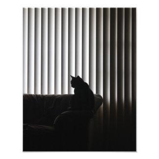 Lonely Cat Photo Print