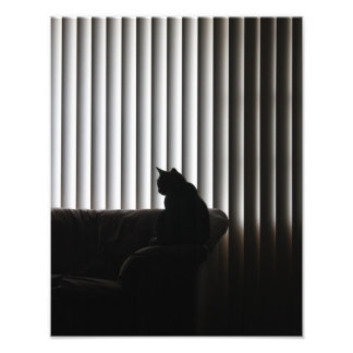 Lonely Cat Photograph