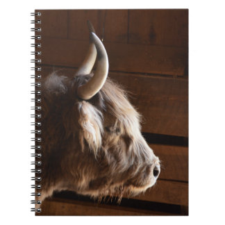 Lonely Cattle Steer Spiral Notebook