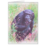Lonely Chimp Cards