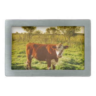 Lonely Cow in the Meadow Facing the Camera Belt Buckle