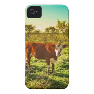 Lonely Cow in the Meadow Facing the Camera iPhone 4 Case-Mate Case