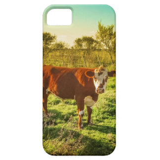 Lonely Cow in the Meadow Facing the Camera iPhone SE/5/5s Case