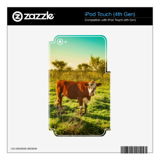 Lonely Cow in the Meadow Facing the Camera Skin For iPod Touch 4G