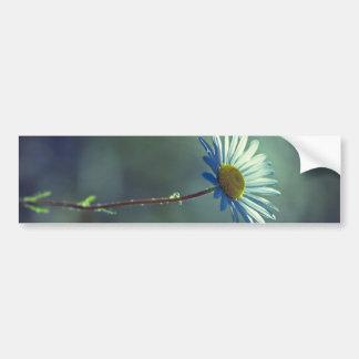 Lonely daisy bumper sticker