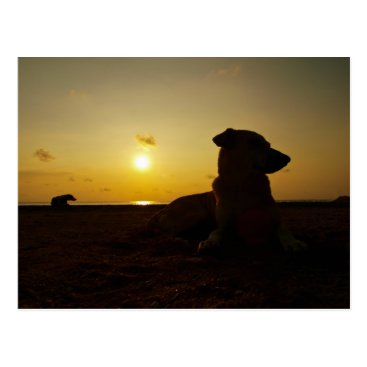 Beach Themed lonely dog postcard