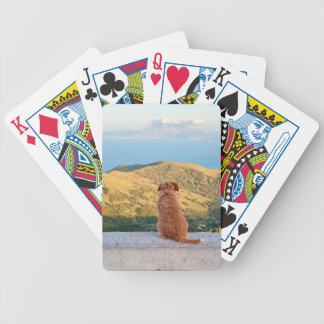 Lonely dog watching on Gibraltar strait Bicycle Playing Cards