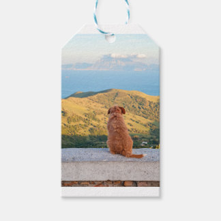 Lonely dog watching on Gibraltar strait Gift Tags