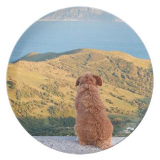 Lonely dog watching on Gibraltar strait Melamine Plate