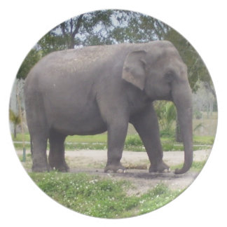 Lonely elephant dinner plate