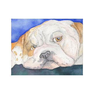 Lonely English Bulldog Canvas Wrap Canvas Prints
