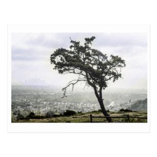 Lonely Freakin Tree Postcard