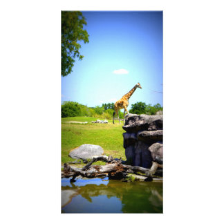 Lonely Giraffe Photo Cards