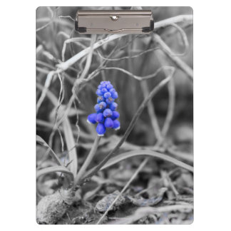 Lonely Grape Hyacinth Select Color Clipboard