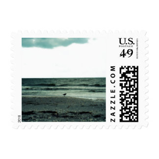 Lonely Gull Postage Stamp