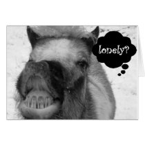 """""""LONELY HOG"""" MAKES CHRISTMAS JOKE WITHOUT """"YOU"""" CARD"""