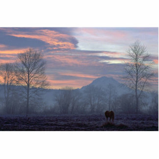 Lonely Horse Grazing Photo Cutouts