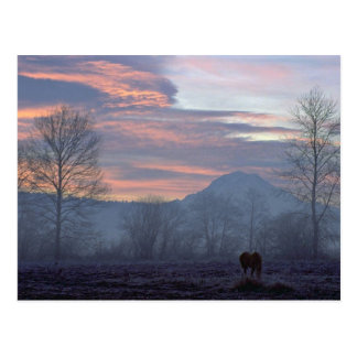 Lonely Horse Grazing Postcard
