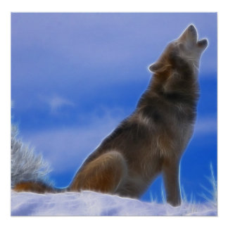 Lonely Howling Endangered Gray Wolf Poster