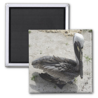 Lonely Pelican Refrigerator Magnet