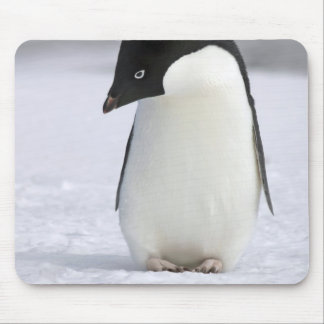 Lonely Penguin Mouse Pad