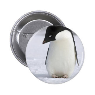 Lonely Penguin Pin
