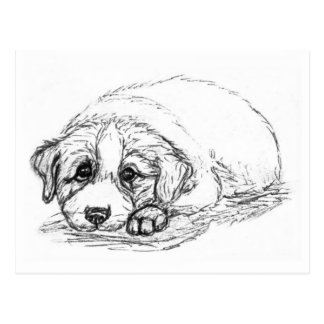 Lonely Puppy Postcard