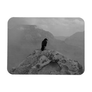 Lonely Raven Magnets