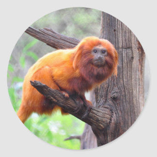 Lonely Red Leaf Monkey Classic Round Sticker