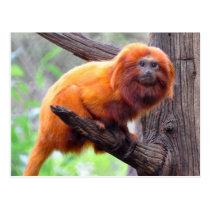 Lonely Red Leaf Monkey Postcard