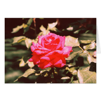 Lonely Rose Card