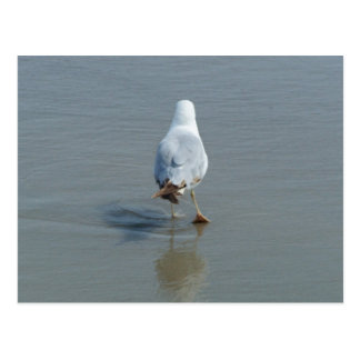 Lonely Seagull Postcard