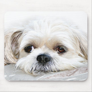 lonely shih tzu mousepad