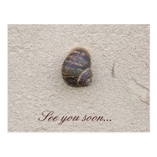 Lonely Snail on the Wall Postcard