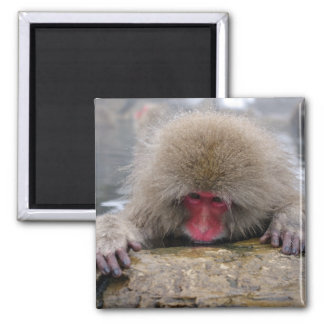 Lonely snow monkey in Nagano, Japan 2 Inch Square Magnet